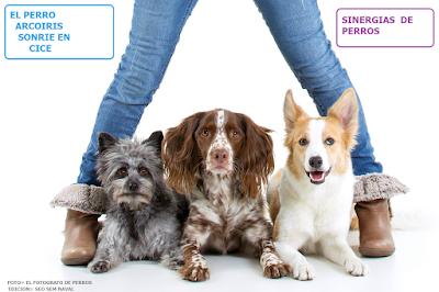 estrategias seo sem-el perro arcoiris sonrie en cice
