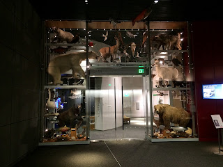 The Wonder Wall exhibit of Alaskan animals at the Alaska State Museum.