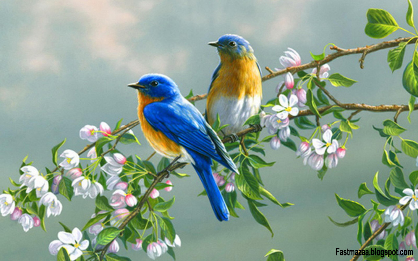 Love Birds Wallpapers: Fast Maza: NEW COLORFUL HD BIRDS WALLPAPER