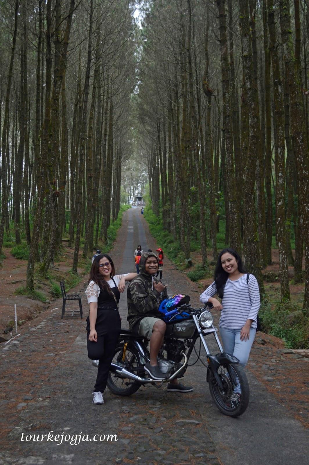 Hutan Pinus Kragilan akan membawa mu dalam Imaginasi dan Mimpi ~ Tour dan Wisata Ke Jogja