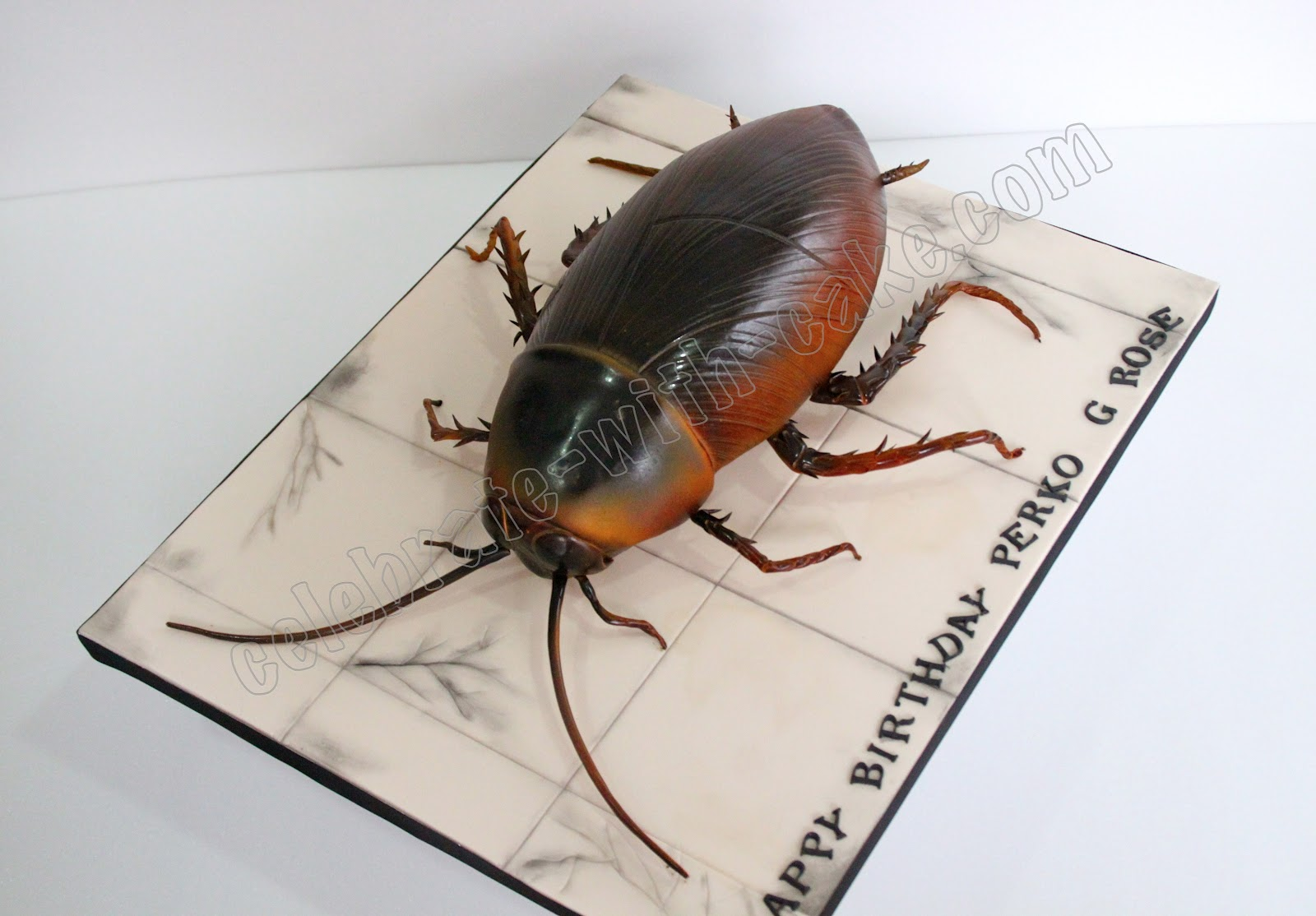 hissing cockroach diagram mercruiser trim pump wiring cake