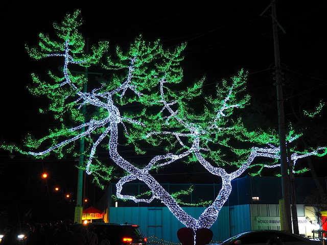 Tree adorned with lights at the Light Festival at the Yulpo Beach area of Boseong Green Tea Plantation, South Korea