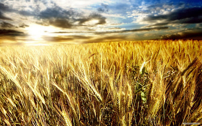 Separating the Wheat from the Weeds - A Homily for the 16th Sunday in Ordinary Time