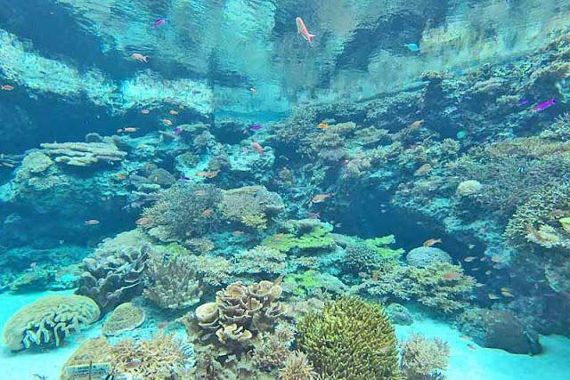 aquarium, Churaumi,Motobu, Okinawa, travel