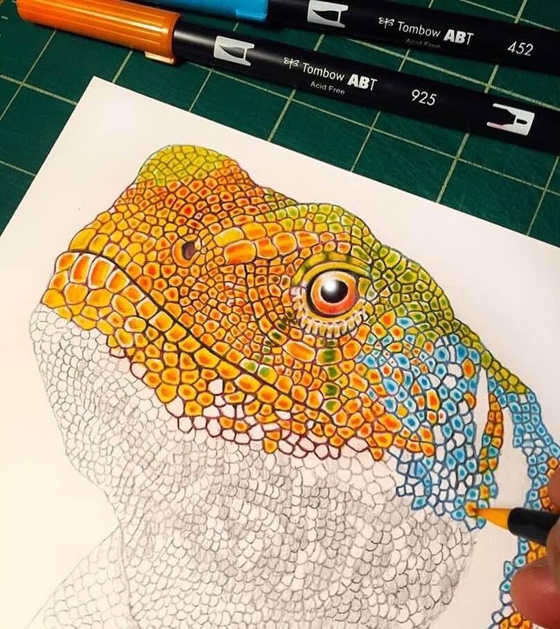 14-Lizard-Tim-Jeffs-www-designstack-co