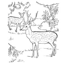 Baby Deer Coloring Pages For Free