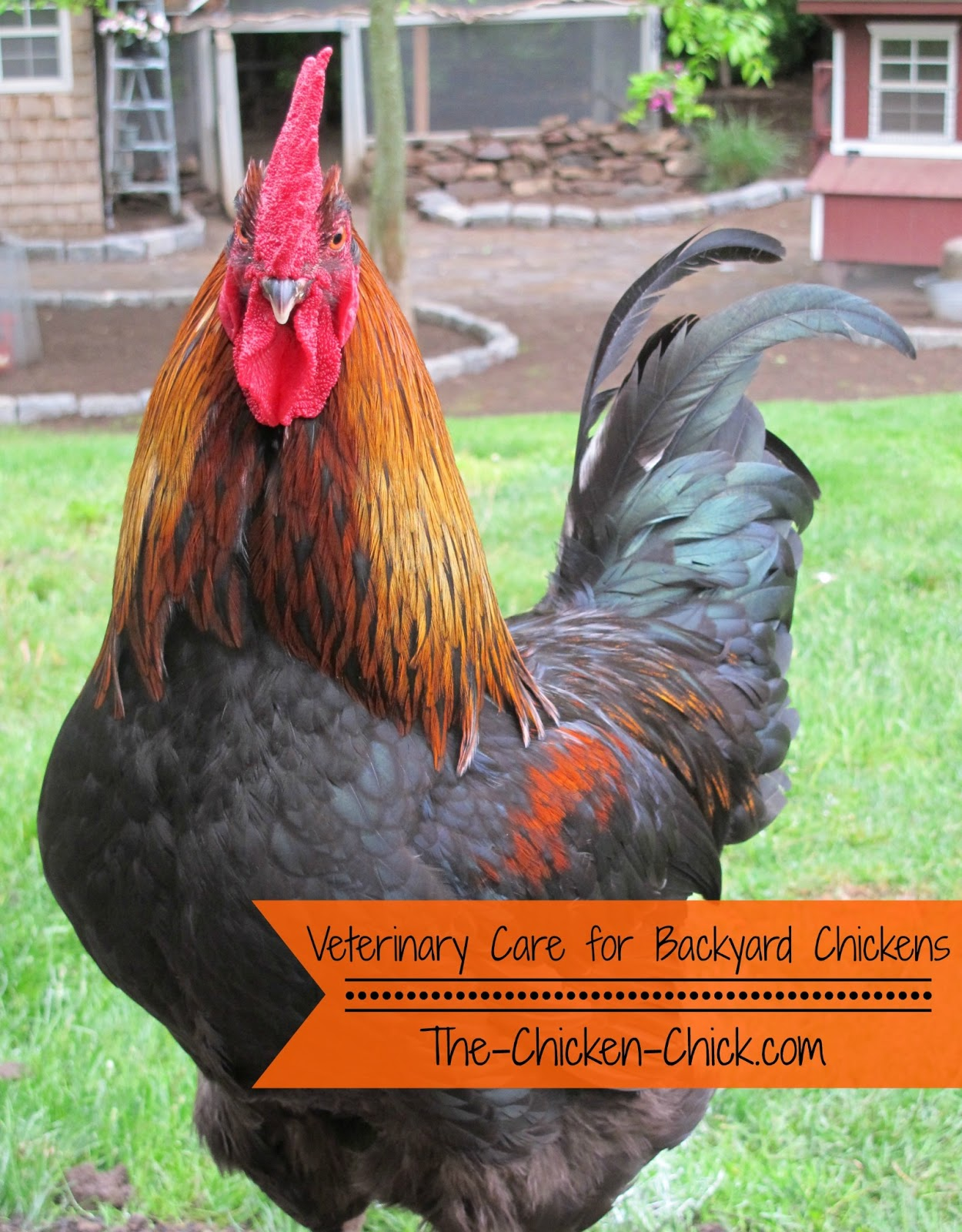 Veterinary Care For Backyard Chickens A Dialogue That