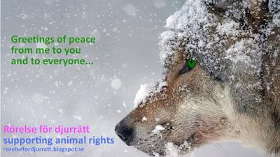 Wolf and quote - Rörelse för djurrätt
