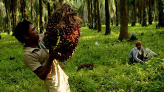 The Amazing Of Benefits oil palm for human life - Healthy T1ps