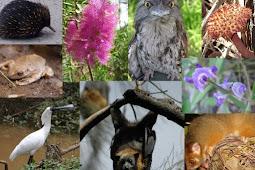Keanekaragaman Makhluk Hidup dan Upaya Pelestariannya