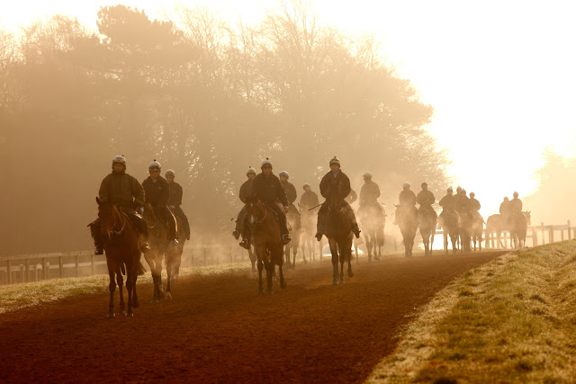 Horses at Newmarket in the morning