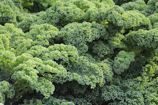 Kale is green leafy vegetable which is a great source of calcium