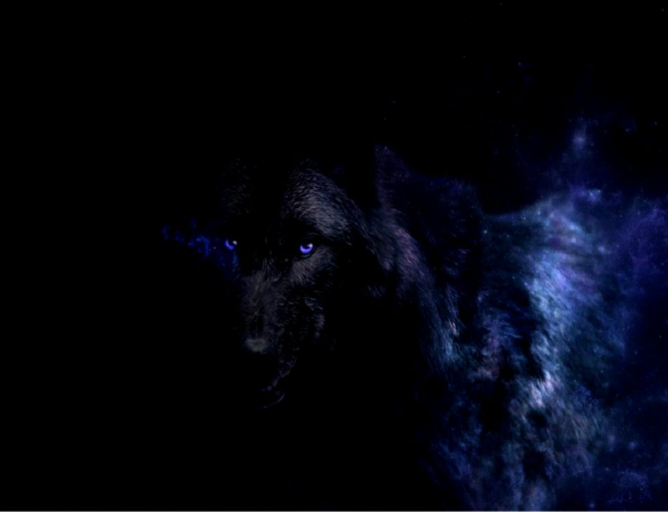 Black Wolf Wallpapers Wallpapers Abstract