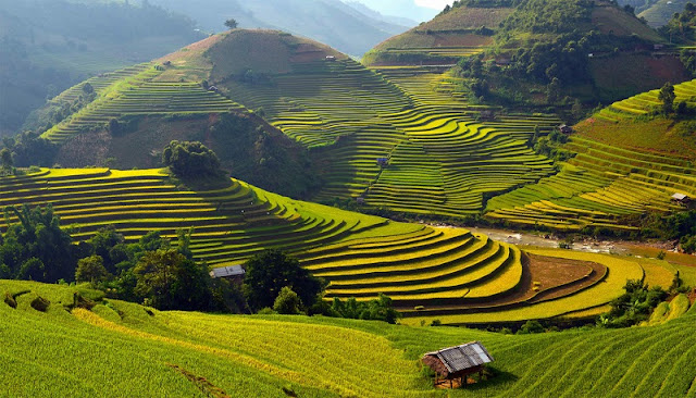 What city in Vietnam will be an ideal travel destination for you? 2
