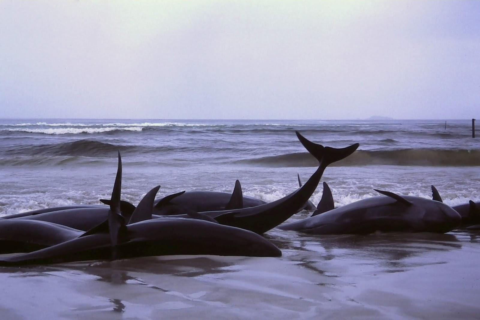 لن تصدق كم تزن ألسنة الحيتان الزرقاء All Sciences
