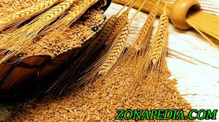 9. Gandum Kandungan pada gandum mempunyai biotin vitamin B yang dapat membantu sel memproses lemak. Dan kulit yang bersih serta lembab sangat membutuhkan vitamin B.   Jadi, jika sahabat telah mengkosumsi gandum seperti rotih putih maka akan biasa untuk dapat membantu kulit lebih sehat.