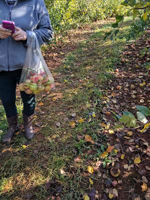 apple picking at Carter Mountain Orchard, Charlottesville, VA