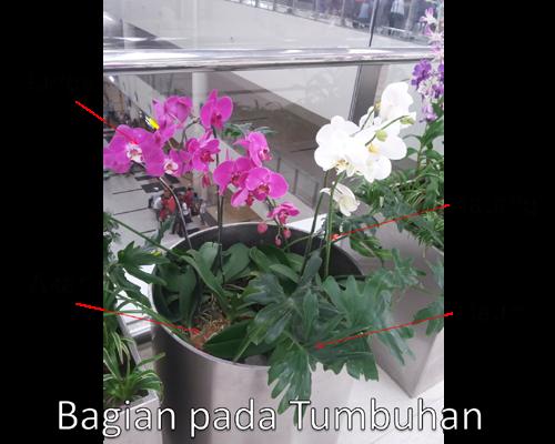 bagian yang ada pada Tumbuhan beserta fungsi bab tersebut Bagian-bagian Tumbuhan, dan fungsinya