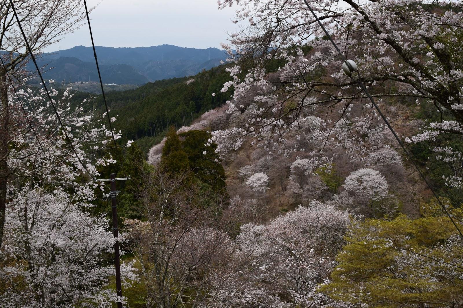 Yoshinoyama view
