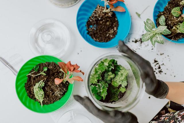 Darmowe katalogi roślin oraz bezpłatne czasopisma ogrodnicze