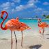 TPG совместно с ICTV разыгрывают грандиозный приз — путевку в Доминикану