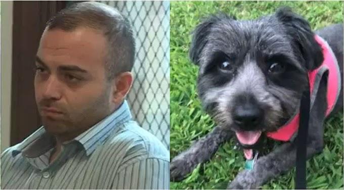 Un enfermero dominicano acusado de asesinar a golpes el perro de su novia en Massachusetts
