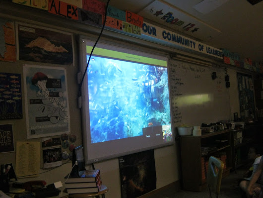 Seattle Aquarium Google Hangout