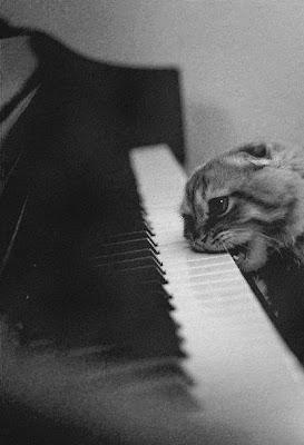 gato tocando el piano