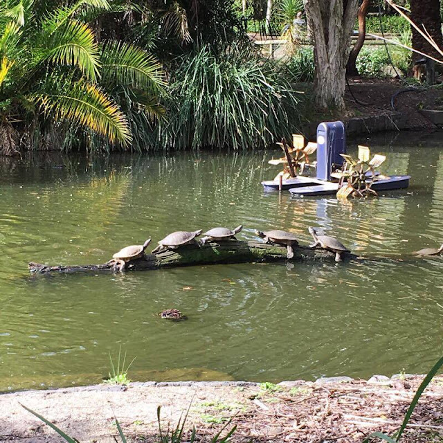 Adventure #7: Melbourne Zoo