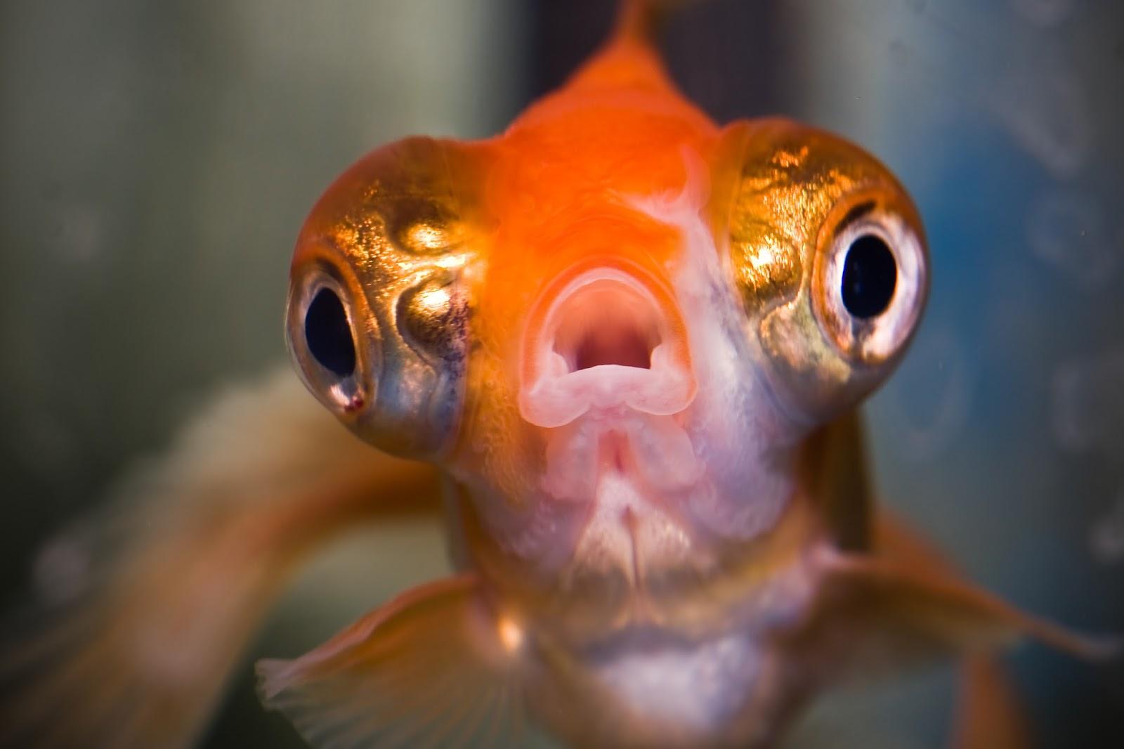 доступной картинки рыба с открытым ртом дальше рецептах кростини