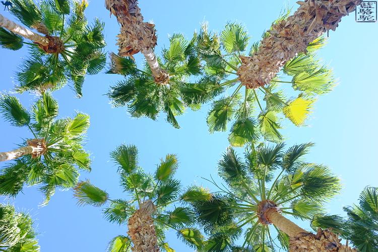 Le Chameau Bleu - Palmier de l'Hotel La Quinta - Californie du Sud USA