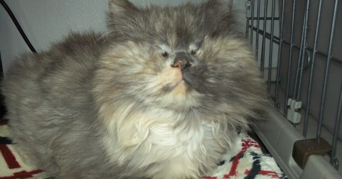 Blind Cat Rescue And Sanctuary Kidney Disease In Cats