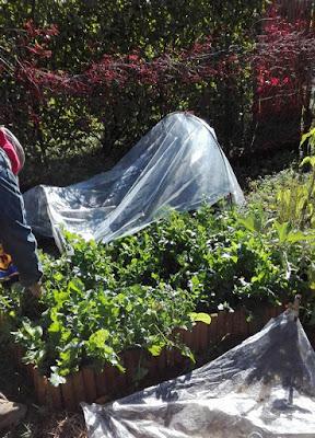 Programmare l'orto per l'estate: seminare rucola ad aprile