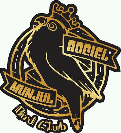 Unduh 78+  Gambar Burung Lovebird Logo HD  Gratis