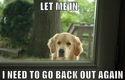 Funny Let Me In Dog Meme Joke Picture