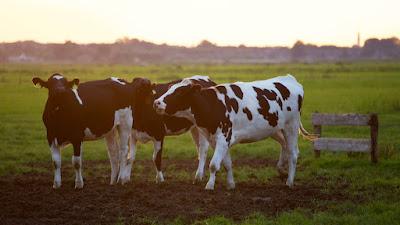 3 idei de afaceri PROFITABILE pentru cei care detin un teren in mediul rural!