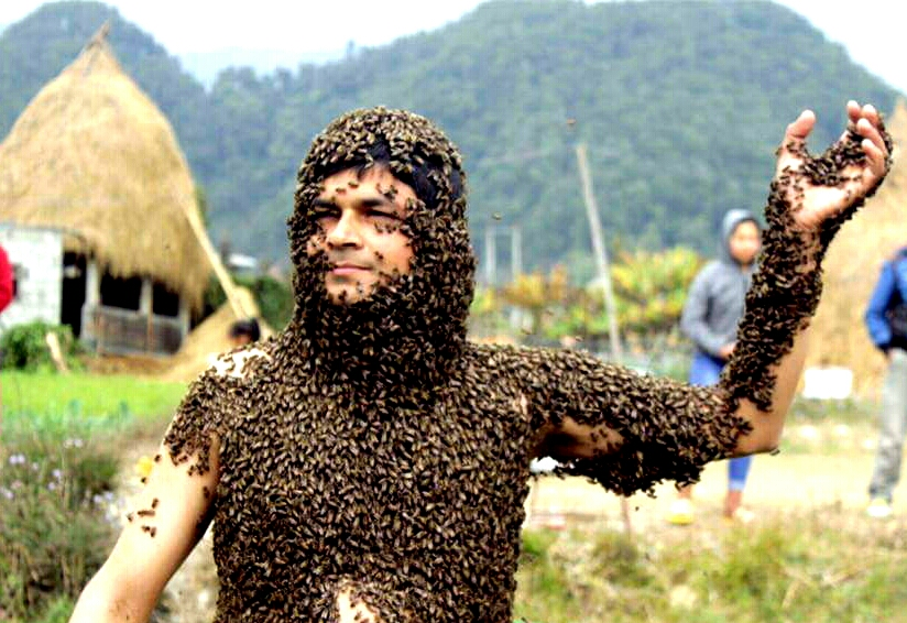 dr pete s health secrets bee venom kills hiv virus