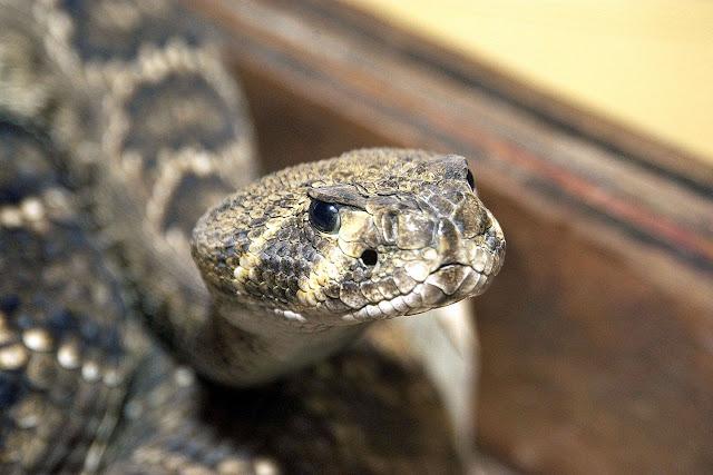 Γιατί γέμισε φίδια η Λάρισα;