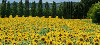 Taman Matahari Wisata Taman Bunga Nusantara