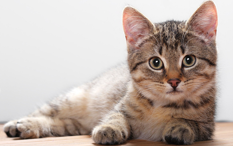 Most Dangerous and Deadly Cat Diseases