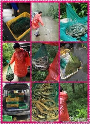 wanita lepas 900 ekor ular untuk hapus dosa