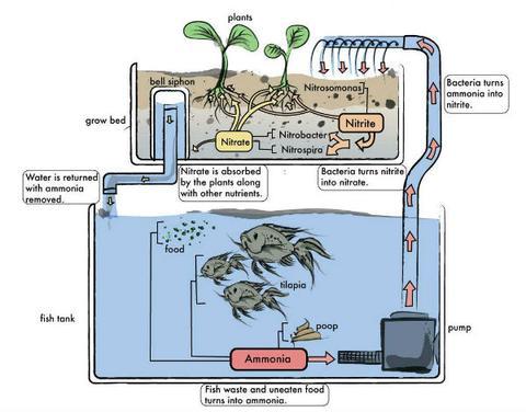 The Aquaponics System