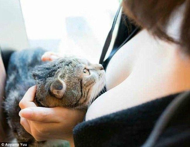 Γάτες σε συμπληγάδες (Φώτο)