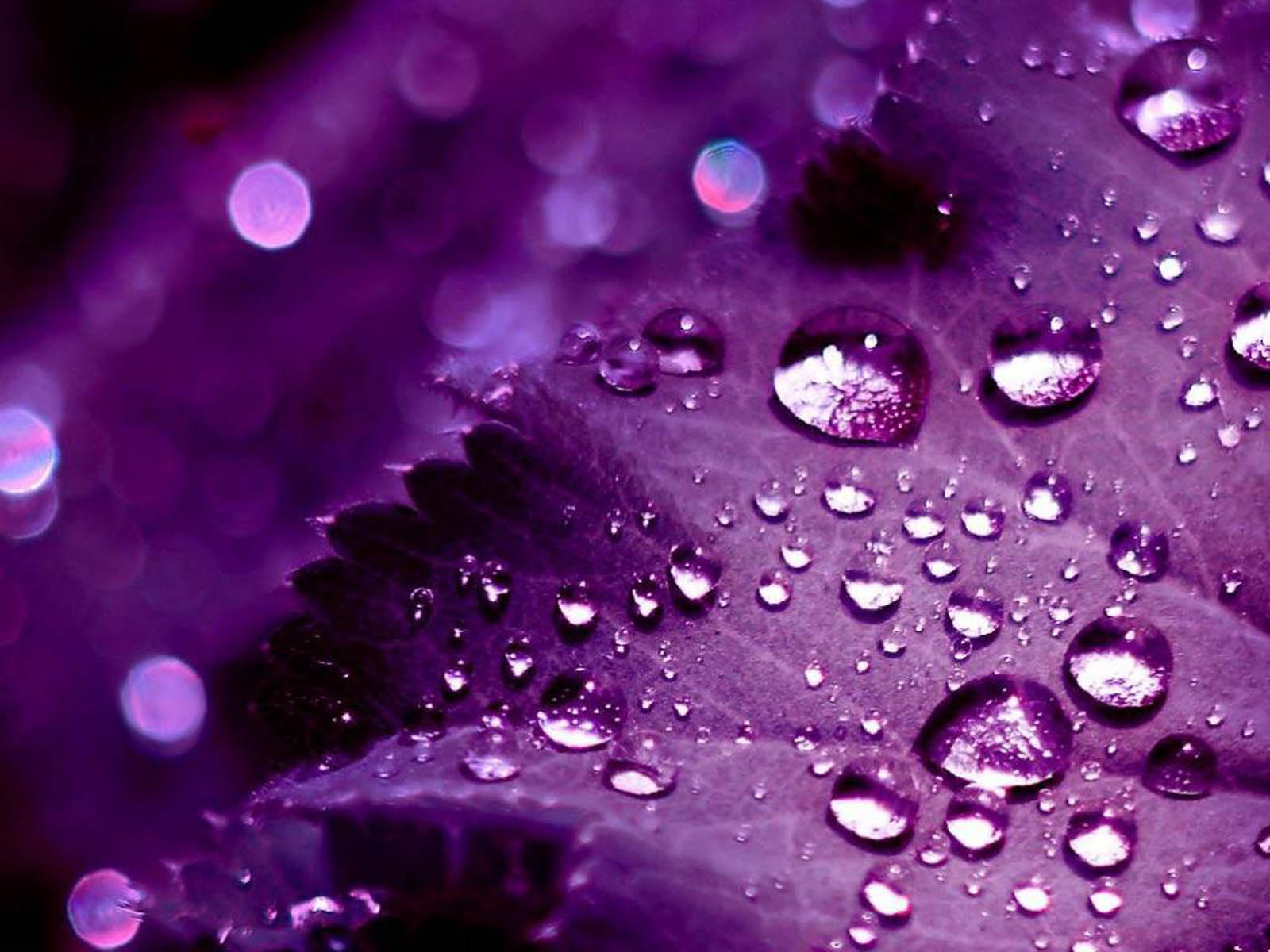 XS Wallpapers HD: 3D Purple Wallpapers