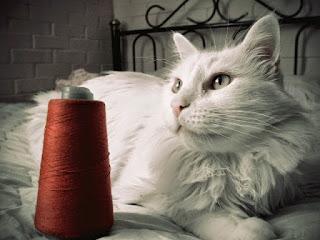 Gambar Kucing Anggora Lucu dan Imut 100017