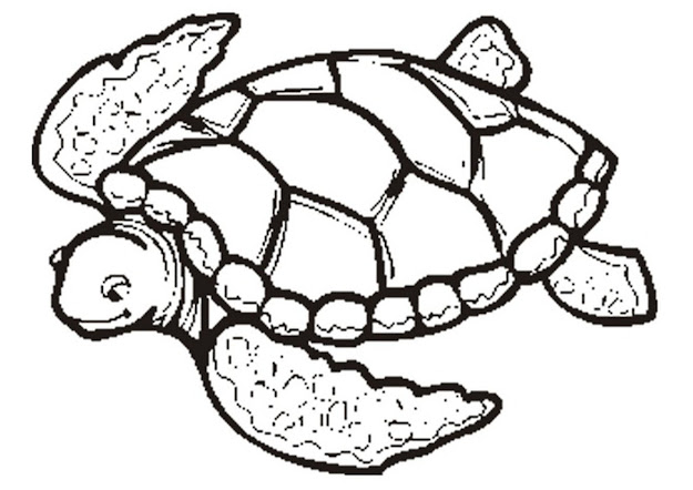 Turtle Coloring Pages  Sea Turtles Coloring Page Free Printable Turtle  Coloring Pages For Kids