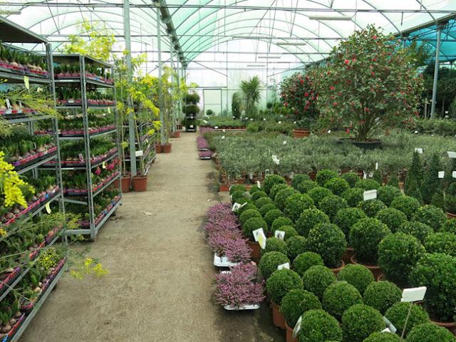 Visita a viveros shangai en madrid paisaje libre Viveros y jardines