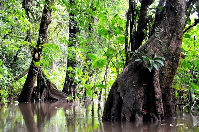natuur frans-guyana, amazonewoud,
