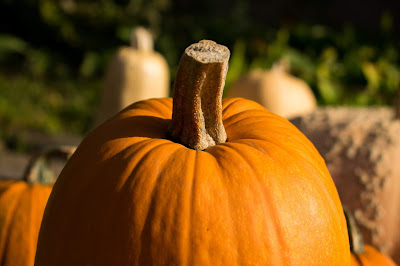 photo of pumpkin by Arnaud Weyts on Unsplash
