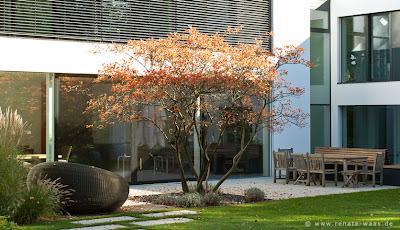 Pflanzplanung für einen modernen Garten mit Lieblingspflanzen wie Amelanchier Felsenbirne